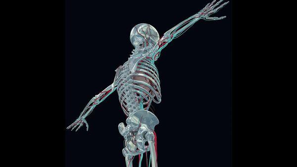 Скелет 3D