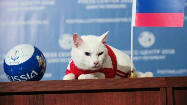 Кот-оракул из Петербурга начал подготовку к ЕВРО-2020
