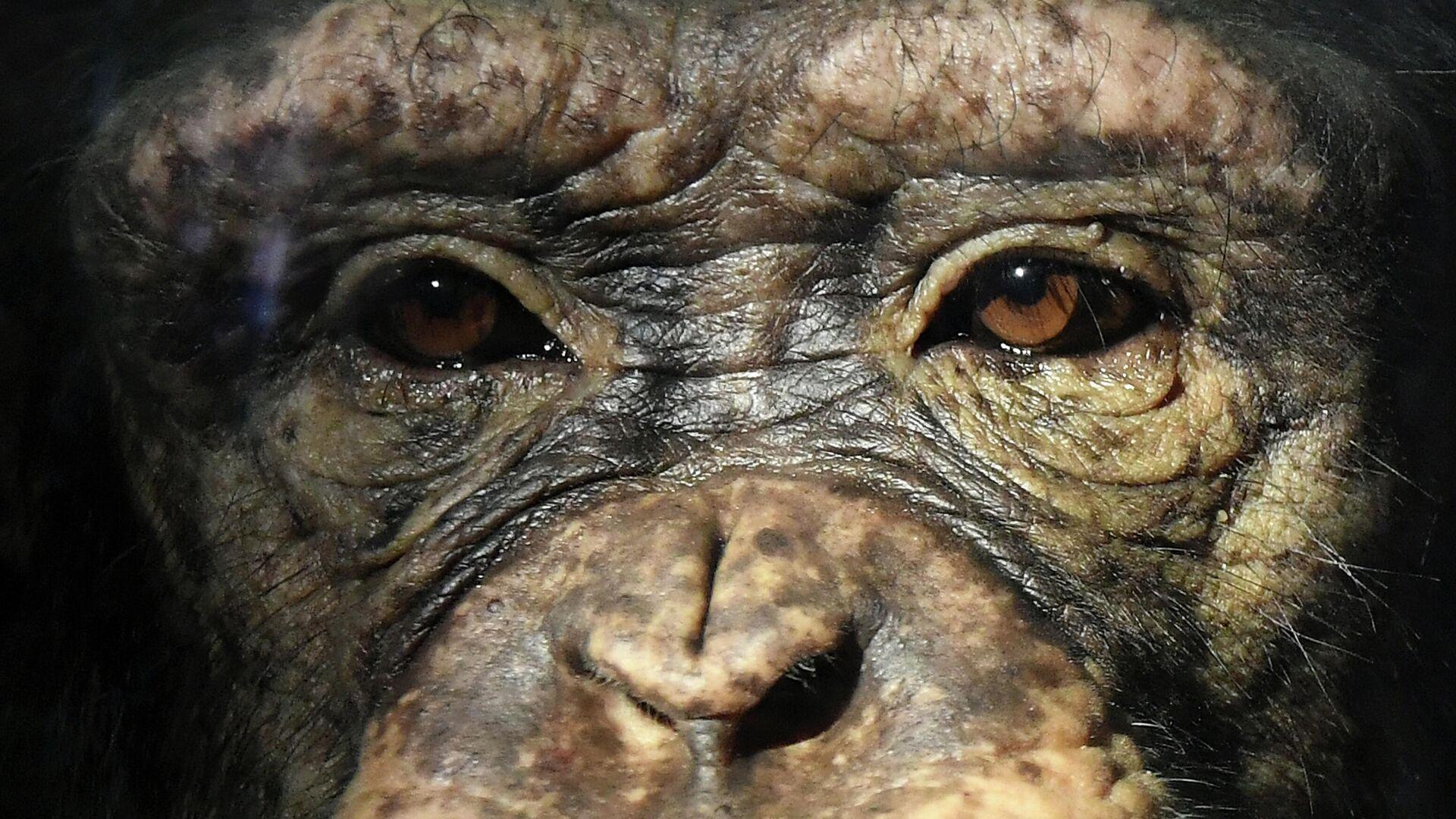 В Сколтехе назвали главное достижение в случае с чипированием обезьяны