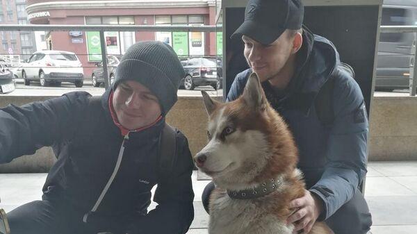 Собака породы хаски в Калининграде