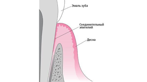 Болезни грязного рта. Простой способ защититься от рака и инфаркта