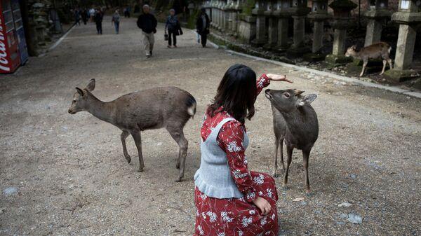 Девушка с оленями в парке города Нара, Япония