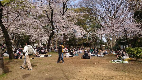 Люди наблюдают за цветением сакуры в Токио