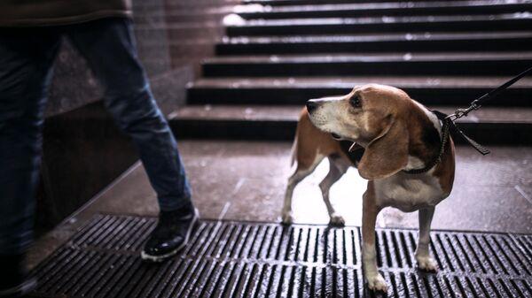 Домашняя собака на прогулке