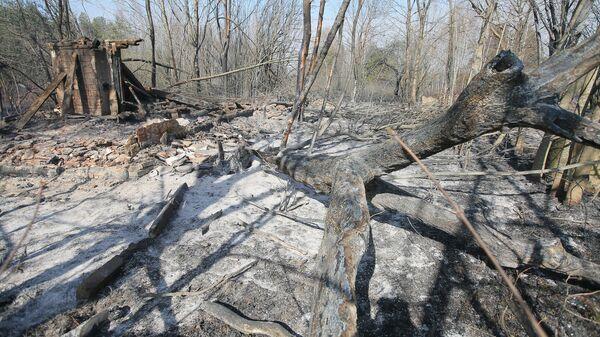 Сгоревший частный дом в результате пожара в Полесском районе на территории зоны отчуждения Чернобыльской АЭС на Украине, где уже почти неделю не прекращаются лесные пожары