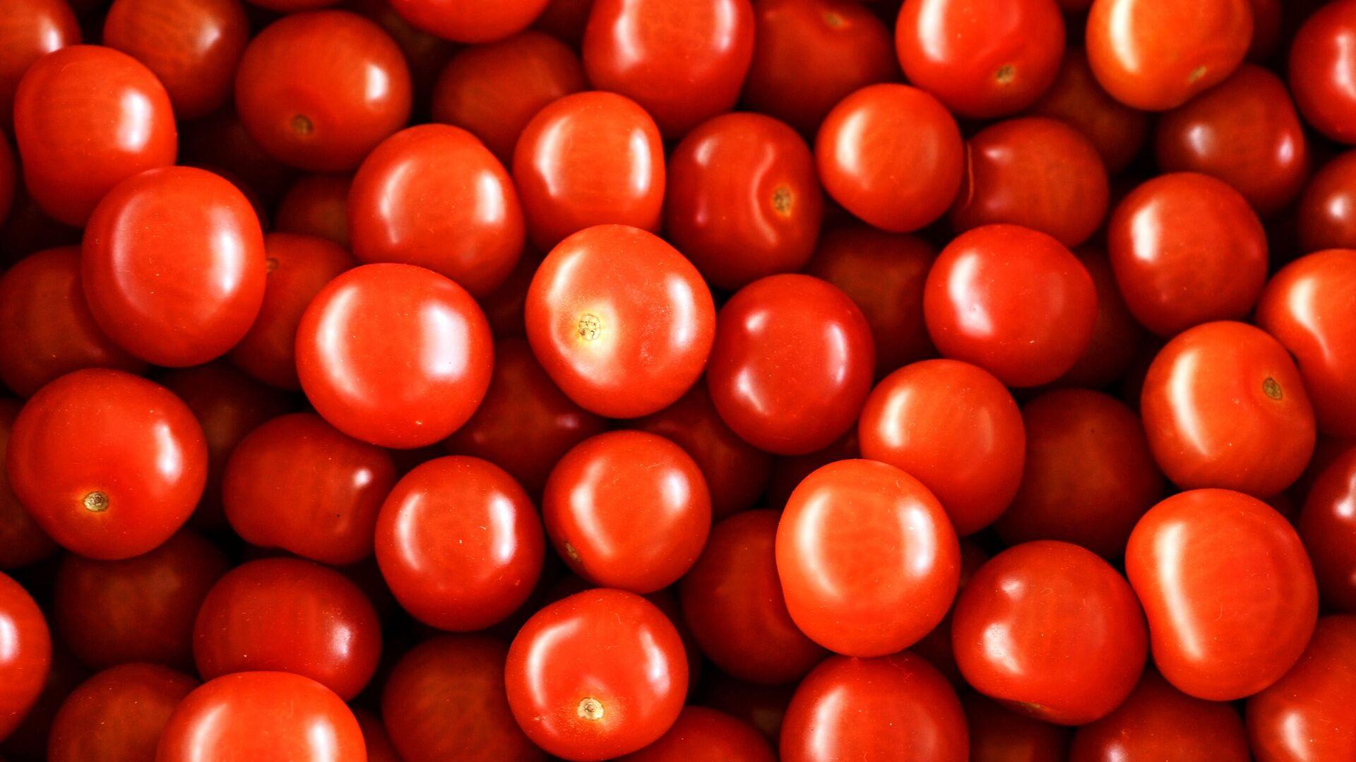 Урожай томатов - РИА Новости, 1920, 30.04.2020