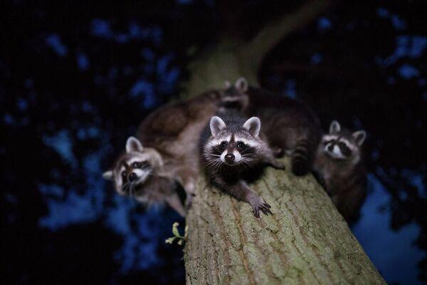 Работа фотографа Jan Piecha в категории Млекопитающие в фотоконкурсе GDT Nature Photographer of the Year 2020