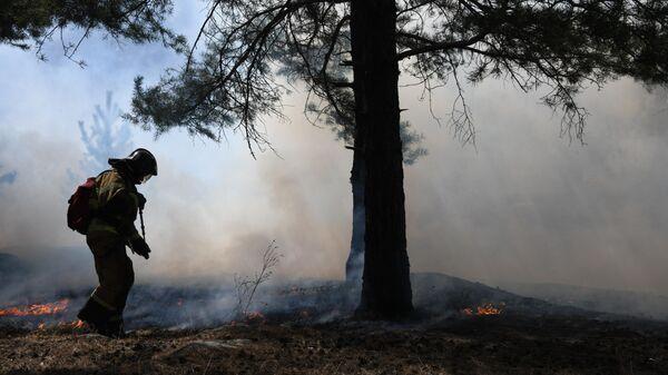 В России ликвидировали 25 лесных пожаров за сутки