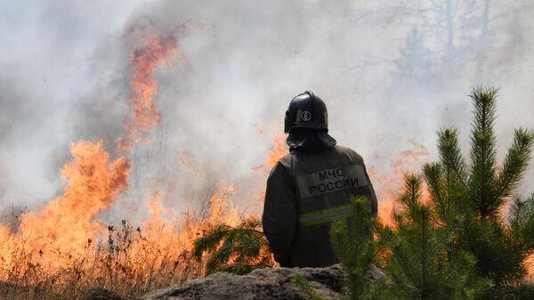 Сотрудник пожарной службы МЧС РФ во время тушения природного пожара