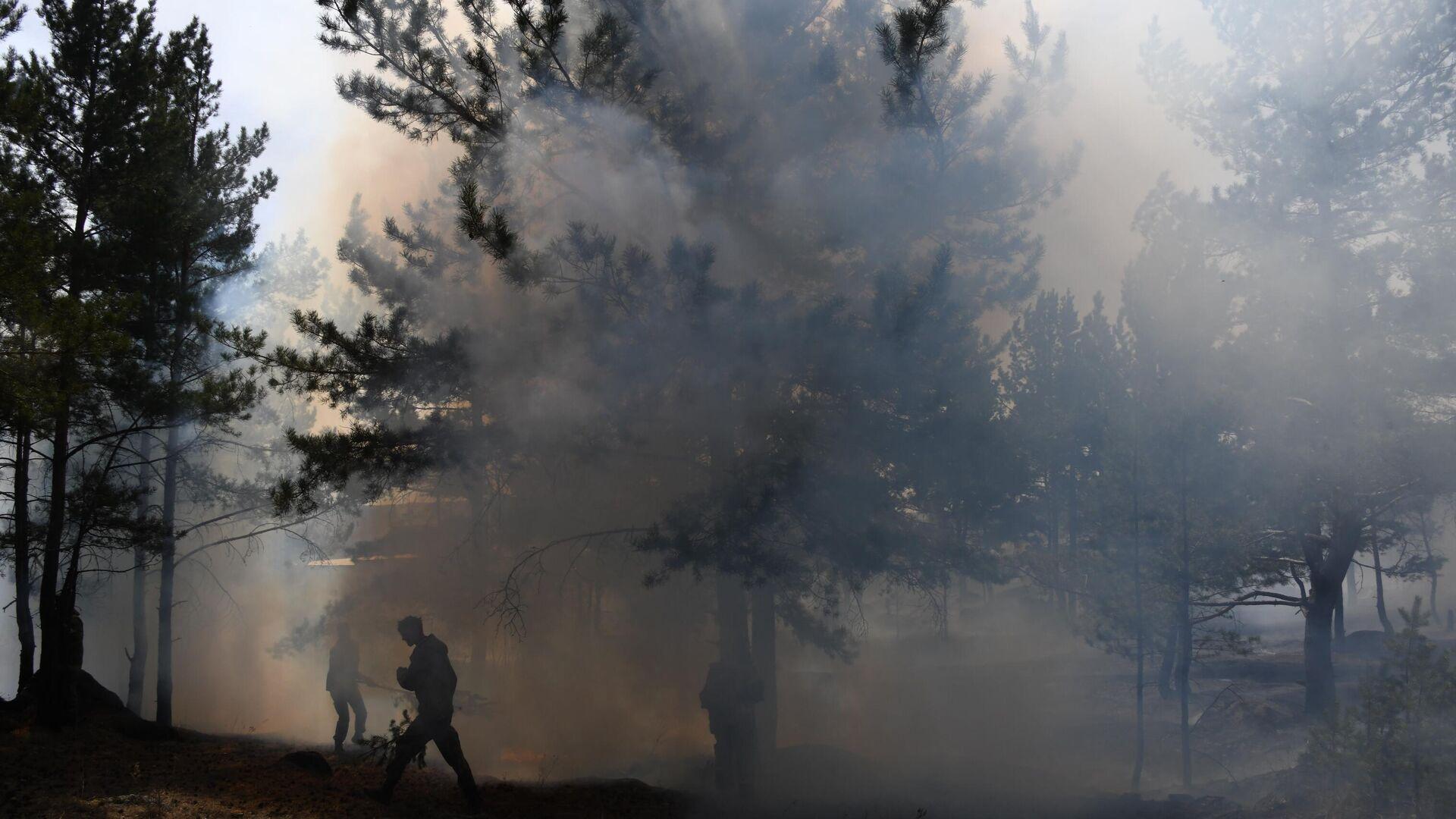 Правительство подготовило поправки в Лесной кодекс
