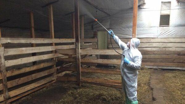 Ветеринар обрабатывает одно из фермерских хозяйств Подмосковья