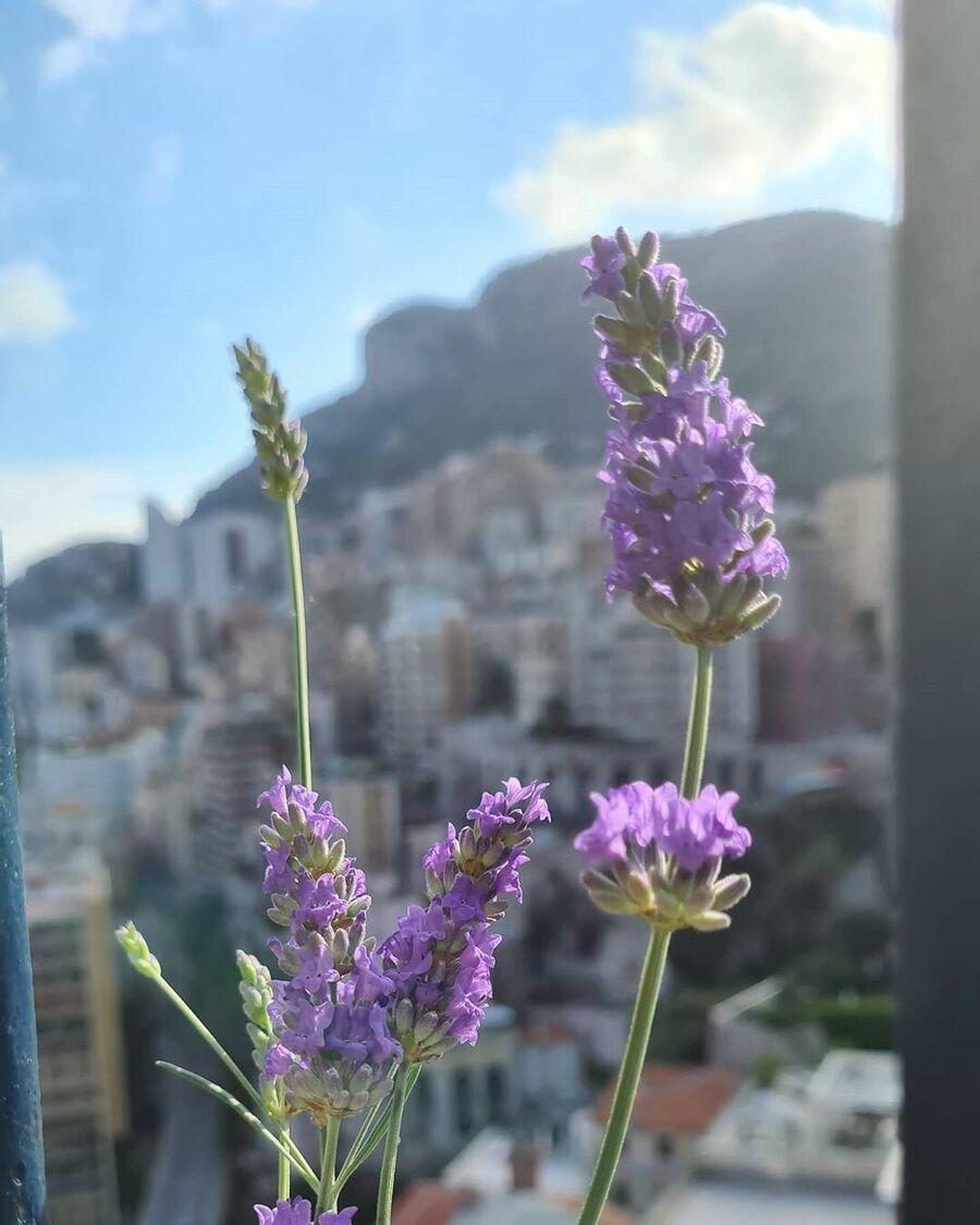 Монте-Карло. Монако