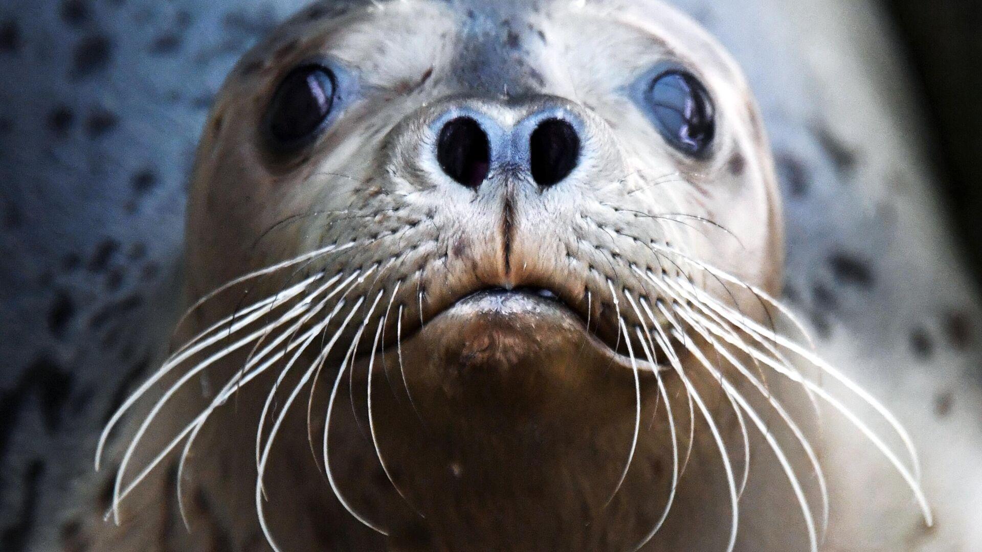 Минприроды объяснило гибель десятков тюленей в Каспийском море
