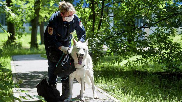 Спасатель-кинолог Юлия Тихонова вместе со своим служебным псом Даней
