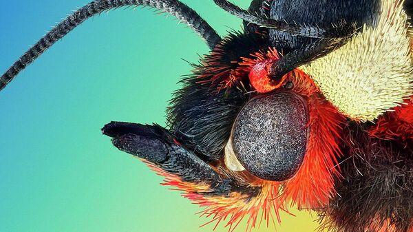 Экстремально резкий и детальный портрет ночной бабочки медведицы-кайя (Arctia caja), автор Retro Lenses