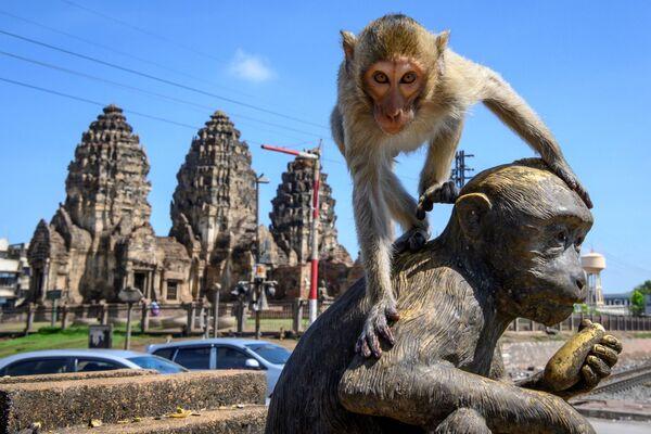 Макака сидит на статуи обезьяны перед буддийским храмом Пранг Сам Йод в Лопбури, Таиланд