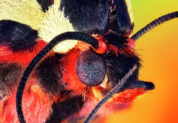 Серии, 3-е место. Портреты насекомых