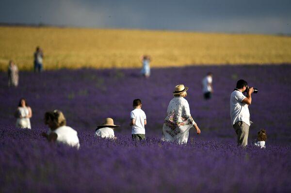 Люди на лавандовом поле в Крыму