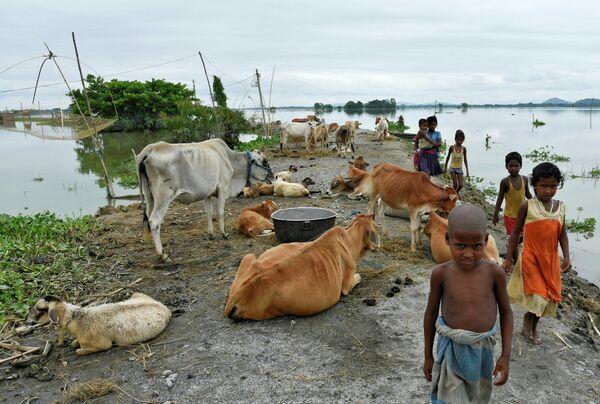 Дети проходят мимо рогатого скота в затопленном округе Моригаон, Индия