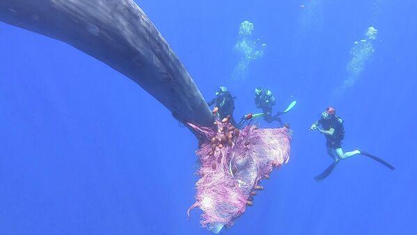 Итальянские водолазы освобождают кашалота, запутавшегося в рыболовной сети, в море к северу от Эолийских островов, Сицилия