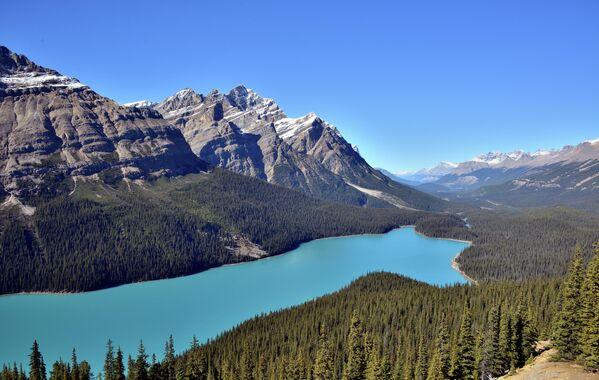 Озеро Пейто в Национальном парке Банф в Канадских Скалистых горах