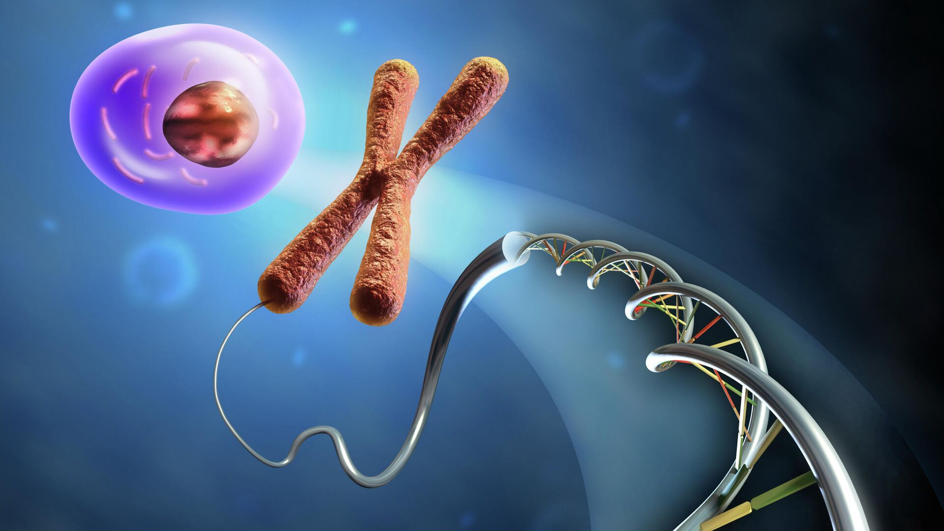 Образование клетки из ДНК и хромосом - РИА Новости, 1920, 05.03.2021