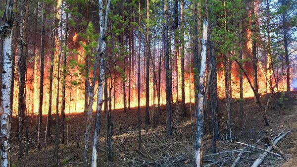 Лесные пожары на территории Якутии