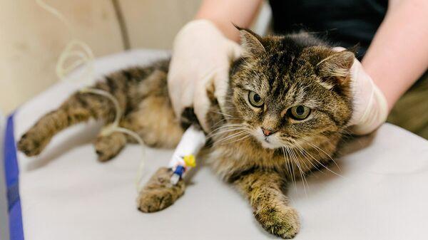 Ветеринар держит кошку во время обследования