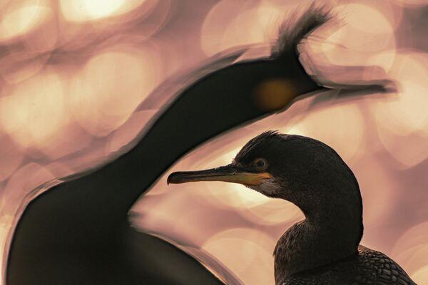 Majed AlZa'abi. Работа победителя конкурса Bird Photographer of the Year 2020