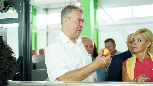 Садоводам Ставрополье в 2020 г выделили господдержку на 764 млн рублей