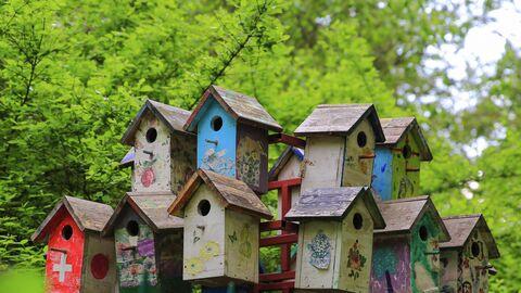 Домик для птиц на территории одного из московских парков