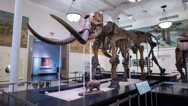 Скелет мастодонта в Американском музее естественной истории