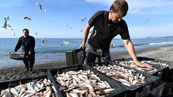 Рыбаки разгружают выловленную рыбу