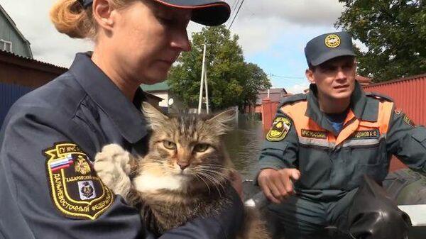 В Хабаровском крае прибывает вода:  сотрудники МЧС спасают людей и животных