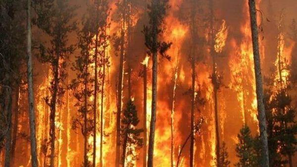 Кадры пожара в Юго-восточном районе Борисоглебска