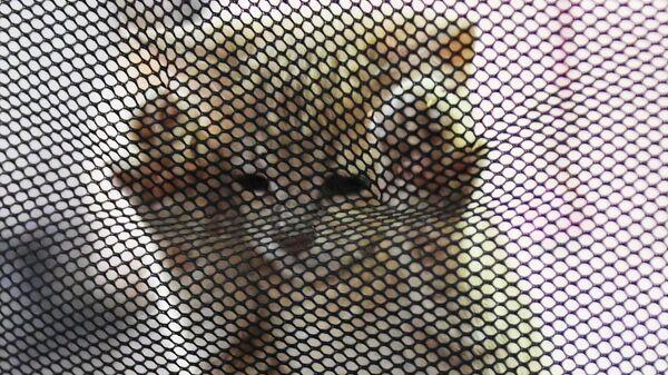 Котенок в переноске на выставке КоШарики Шоу в Сокольниках