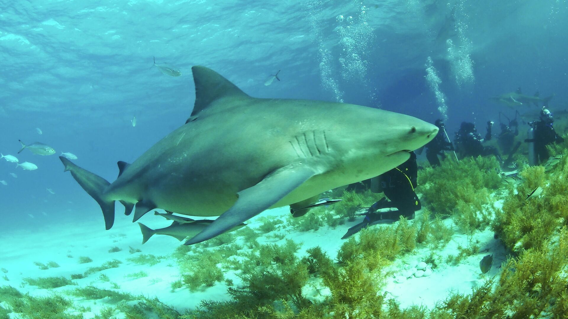 1578068982 0:235:2500:1641 1920x0 80 0 0 9ec8a3f22c82ec49b85e8945bb9f4568 - В США беременная туристка помогла спасти своего мужа от агрессивной акулы