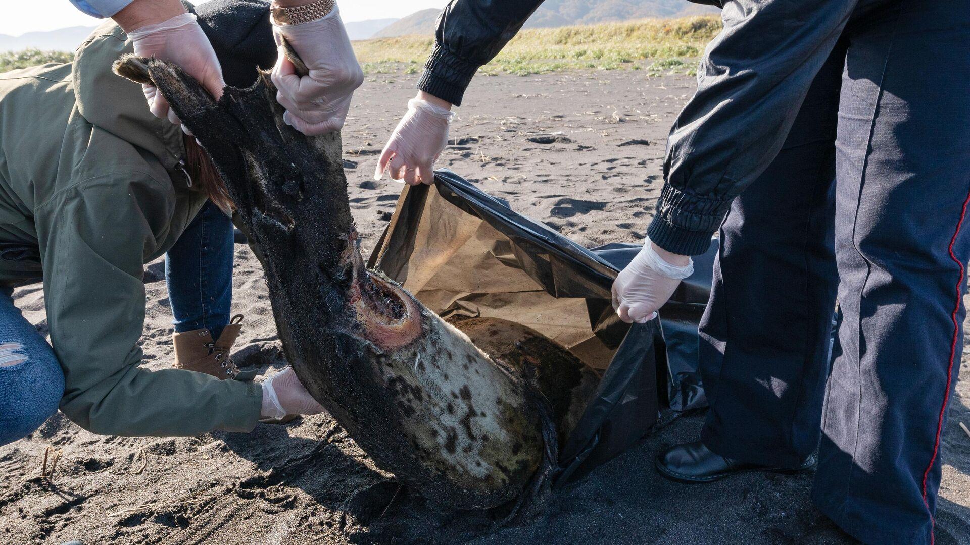 На Камчатке тысячи морских животных выбросились на берег - РИА Новости, 1920, 06.10.2020