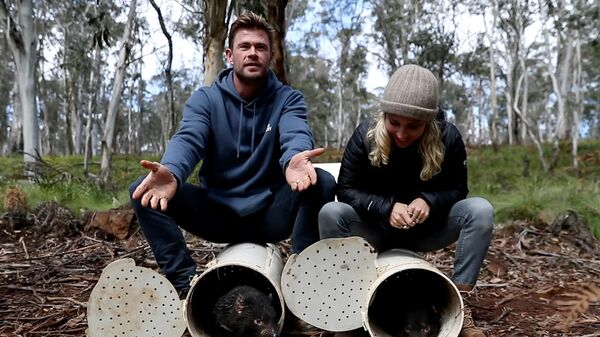 Крис Хемсворт и Эльза Патаки выпускают тасманских дьяволов на вершине Баррингтон, Австралия