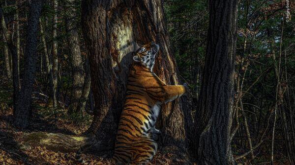 Объятия. Сергей Горшков. Лучшая фотография конкурса Wildlife Photographer of the Year 2020