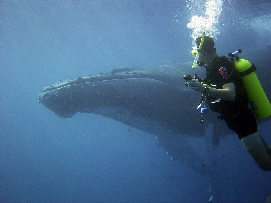 Лейтенант Джо Пика наблюдает за горбатым китом. Доминиканская Республика