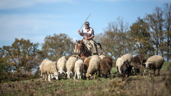 Мужчина-пастух в селе Чанахчи в Нагорном Карабахе