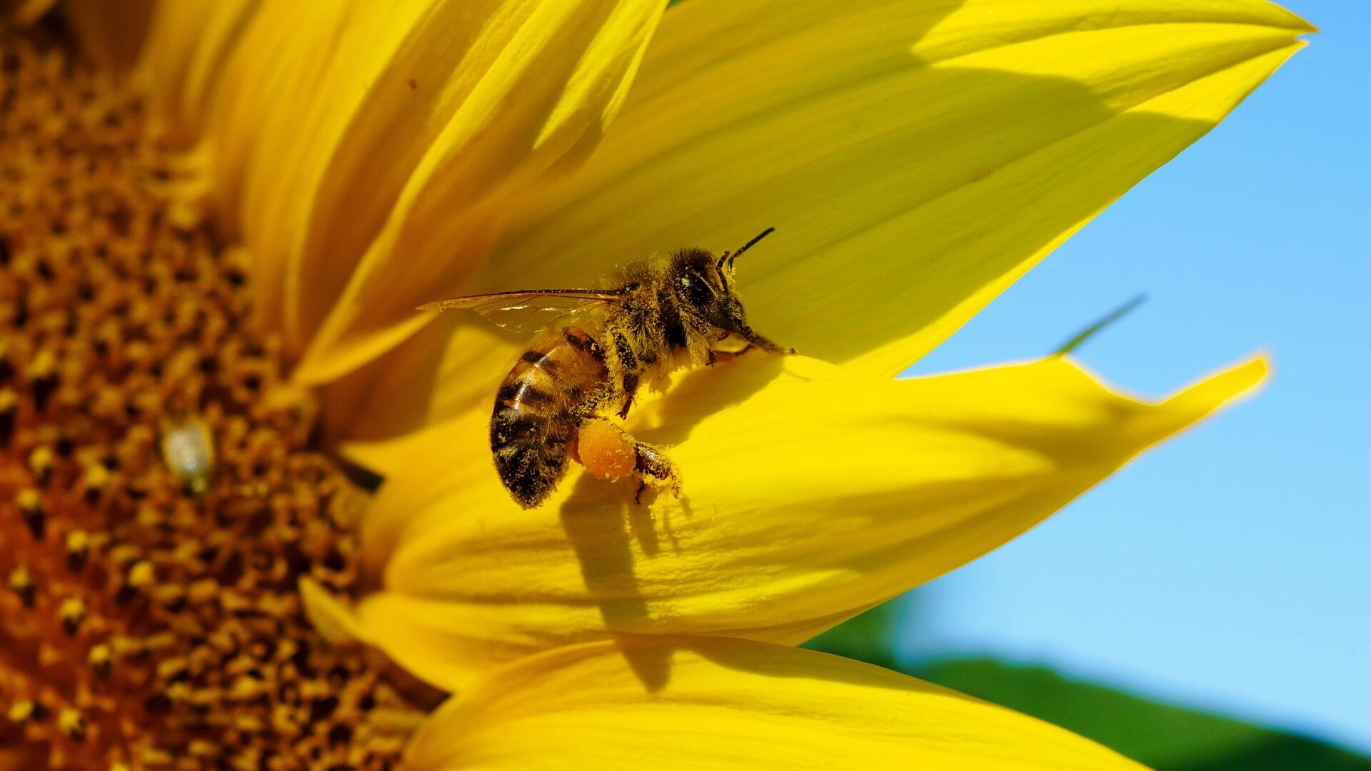 Зоолог рассказал о древних пчелах и их уникальных способностях