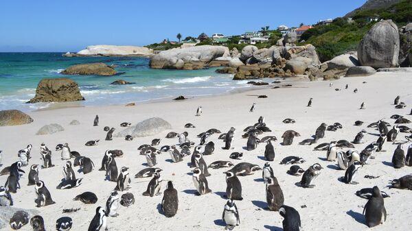 Пингвины на пляже в Кейптауне
