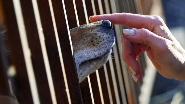 Собака в вольере приюта для бездомных животных