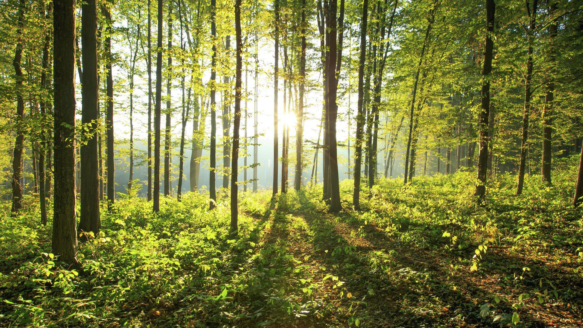 Ученые ведут исследование для создания леса нового поколения
