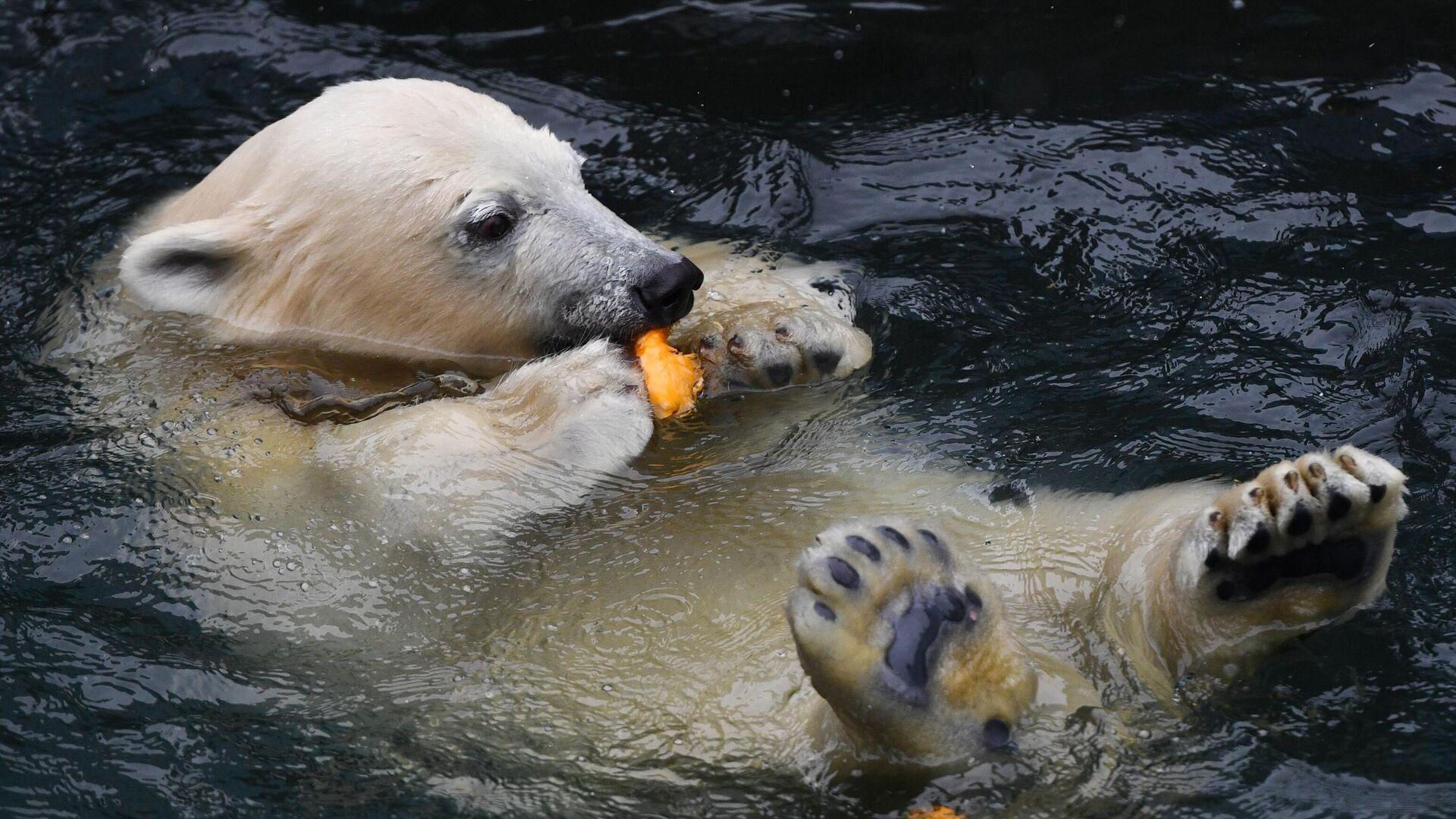В Екатеринбурге проверят зоопарк после гибели белого медведя