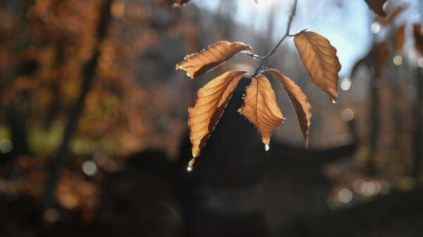 Капли на листьях дерева