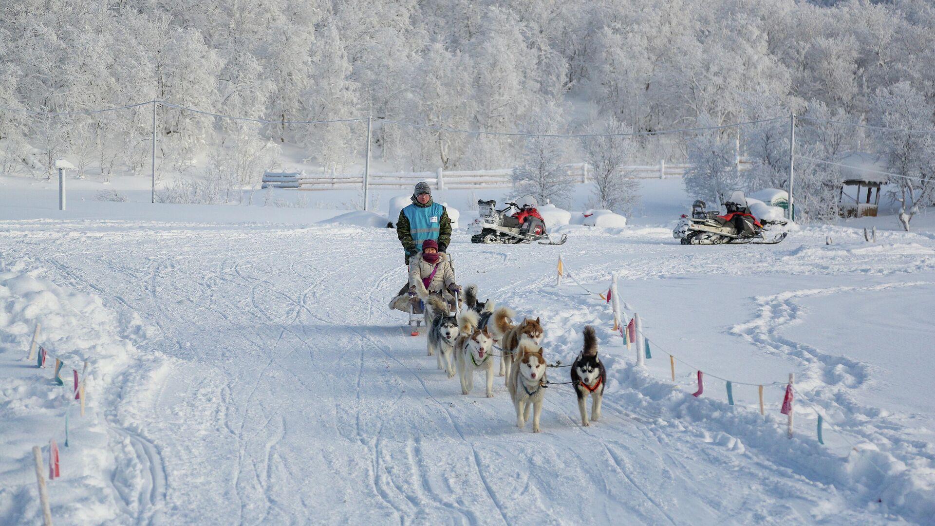 Туристы из Китая катаются на собачьих упряжках в туристическом парке Северное сияние в Мурманской области - РИА Новости, 1920, 18.03.2021