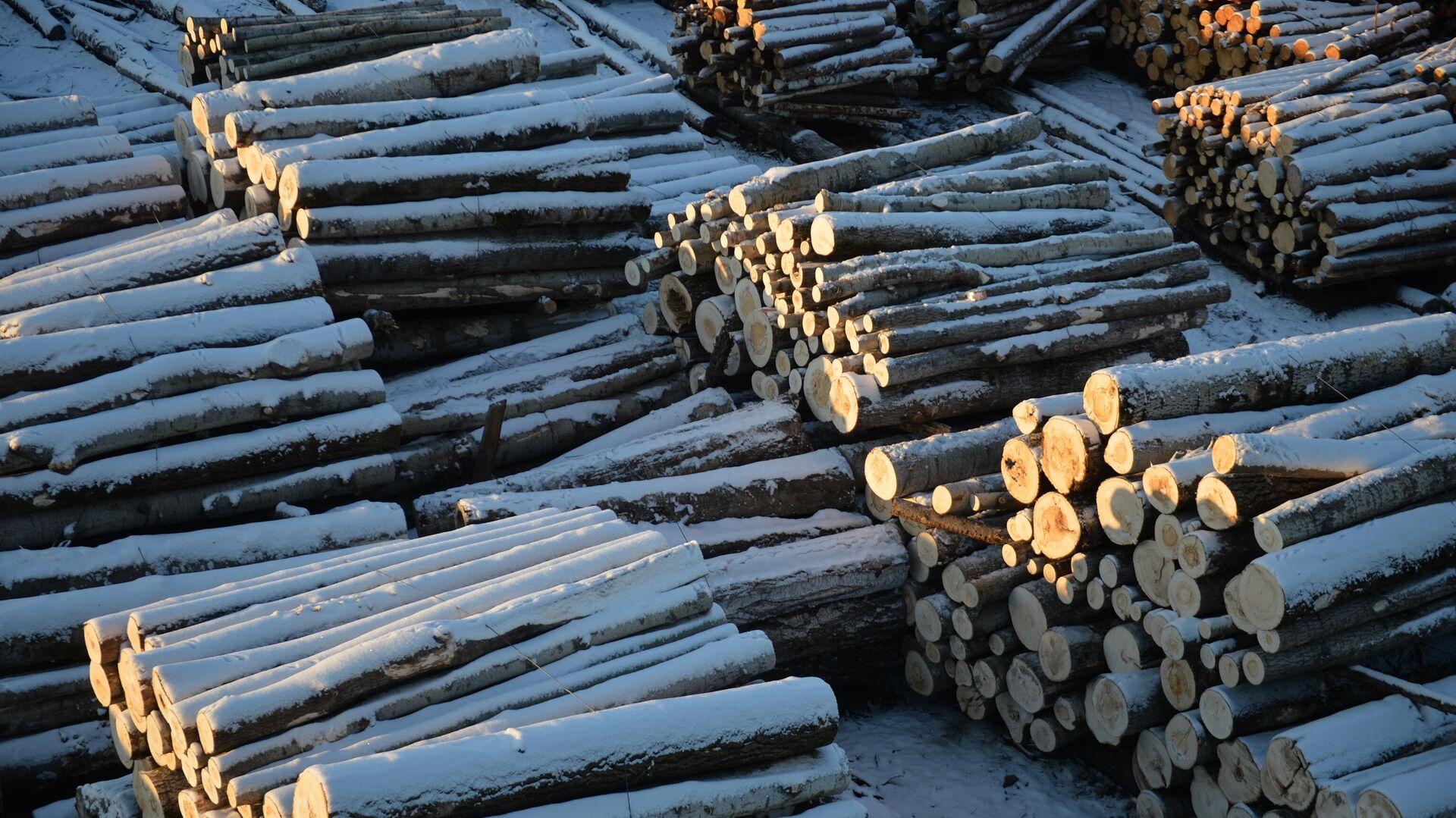 Мишустин утвердил стратегию развития лесного комплекса до 2030 года